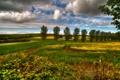 Картинка облака, деревья, природа, луг, поле, небо
