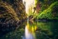 Картинка зелень, лес, вода, деревья, ветки, природа, река