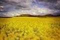 Картинка поле, облака, цветы, холм, поле цветов