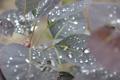 Картинка капли, макро, деревья, листочек. лист