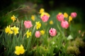 Картинка сад, весна, лепестки, нарцис, тюльпан