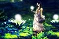 Картинка вода, девушка, цветы, оружие, аниме, арт, нож