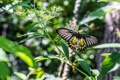 Картинка макро, бабочка, растение, крылышки, стебелёк