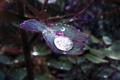 Картинка трава, листья, макро, капля, после дождя, зелёный