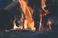 Картинка огонь, костер, дрова, угли