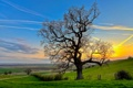 Картинка поле, небо, облака, закат, природа, дерево