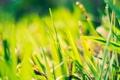 Картинка зелень, трава, солнце
