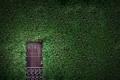 Картинка зелень, листья, стена, листва, растения, дверь