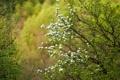 Картинка цветы, ветки, боке