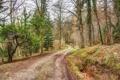 Картинка дорога, осень, лес, обработка