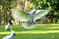 Картинка птица, крылья, попугай, посадка