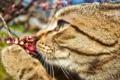 Картинка кот, весна, ягода