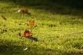Картинка лес, трава, листья, макро, природа, парк