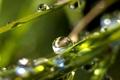 Картинка трава, вода, роса