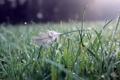 Картинка трава, вода, капли, природа, grass, bokeh, перышко