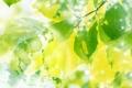 Картинка листья, солнце, природа, весна