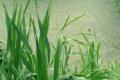 Картинка трава, речка, зеленое