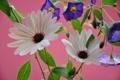 Картинка листья, цветы, природа, растение, лепестки