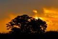 Картинка небо, солнце, облака, деревья, закат, силуэт, кусты