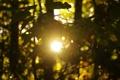 Картинка листья, солнце, свет