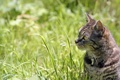 Картинка кошка, трава, кот, макро, котенок, cat