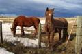Картинка поле, природа, забор, кони