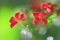 Картинка растение, цветок, соцветие, лепестки