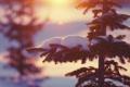 Картинка зима, свет, снег, природа, елки