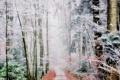Картинка иней, дорога, лес