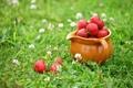 Картинка клевер, клубника, кувшин, трава, ягоды