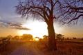 Картинка дорога, пейзаж, дерево