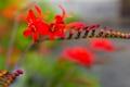 Картинка цветок, паутина, ветка, лепестки, экзотика