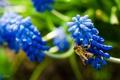 Картинка цветок, Пчела, puxa, пыльца на пчеле