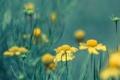 Картинка поле, трава, природа, луг