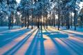 Картинка зима, лес, лучи, снег, деревья, закат