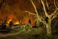 Картинка дорога, свет, деревья, ночь, огни, дом