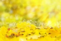 Картинка солнце, желтые, colorful, листья, autumn, leaves, осенние
