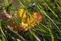 Картинка осень, трава, желтый, природа, лист, опавший