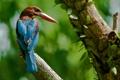 Картинка птица, клюв, перья, дерево