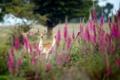 Картинка цветы, природа, косули