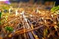 Картинка солнце, макро, Трава, сено, отблеск, боке