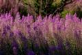 Картинка растение, луг, трава, цветы