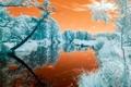 Картинка цвета, деревья, река