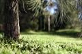 Картинка лето, трава, макро, дерево