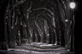Картинка снег, ночь, лавочка, фонарь, набережная, черно белая