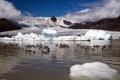 Картинка природа, озеро, утки, лёд