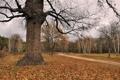 Картинка листья, осень, дерево