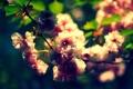 Картинка листья, ветки, природа, растения, лепестки, макро, цветы