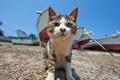 Картинка кошка, кот, интерес, лодки, мордочка