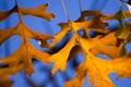 Картинка осень, небо, листья